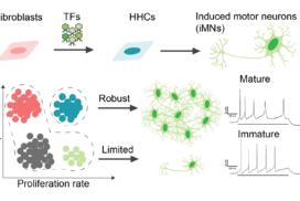 Mitigating antagonism between transcription and proliferation mediated near-deterministic reprogramming