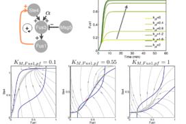 Feedback loops in biological networks