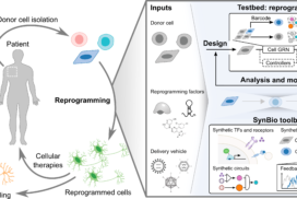 Engineering cell fate: Applying synthetic biology to cellular reprogramming.